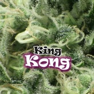 King Kong (Dr. Underground) feminizada