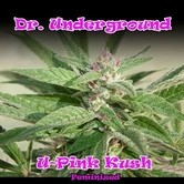 U - Pink Kush (Dr. Underground) feminizada
