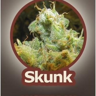 Skunk (John Sinclair Seeds) feminizada