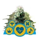 CBD Mix (Royal Queen Seeds) feminizada