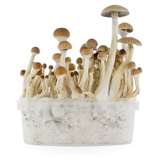 Kit de Cultivo Fresh Mushrooms 'B+'