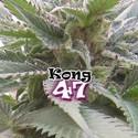 Kong 47 (Dr. Underground) feminizada