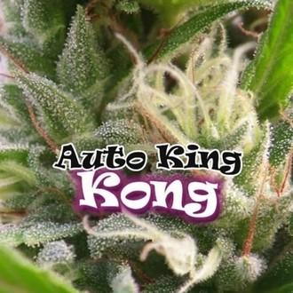 Auto King Kong (Dr. Underground) feminizada