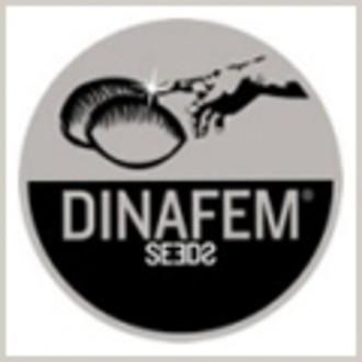 Semilla libre (Dinafem) feminizada