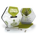 Pineapple Express (Zambeza) feminizada