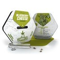 Blueberry Cheese (Zambeza) feminizada