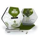 NYC Diesel Autoflowering (Zambeza) feminizada