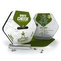 White Cheese Autofloreciente (Zambeza) feminizada
