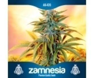 Semilla libre (Zamnesia Seeds) auto