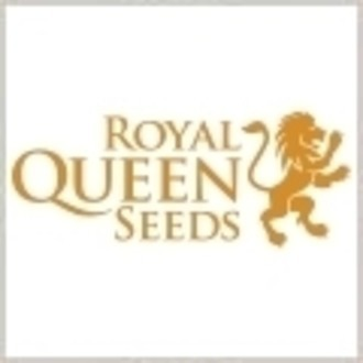 Semilla libre (Royal Queen Seeds) Sour Diesel