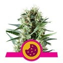 Royal Cookies (Royal Queen Seeds) feminizada