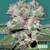CBD Bomb (Bomb Seeds) feminizada