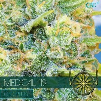 Medical 49 (Vision Seeds) feminizada