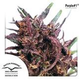 Purple 1 (Dutch Passion) feminizada