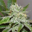Original Juan Herer (Delicious Seeds) feminizada