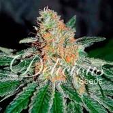 CBD Jam (Delicious Seeds) feminizada