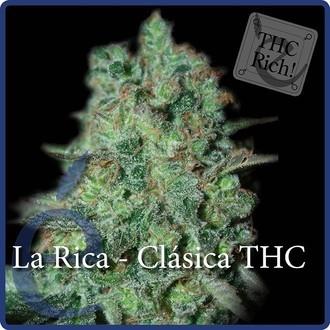 La Rica Classic THC (Elite Seeds) feminizada
