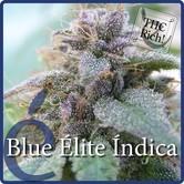 Blue Elite Indica (Elite Seeds) feminizada
