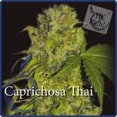 Caprichosa Thai (Elite Seeds) feminizada