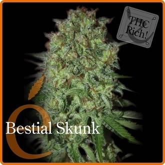 Bestial Skunk (Elite Seeds) feminizada