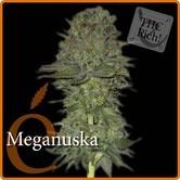 Meganuska (Elite Seeds) feminizada