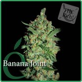 Banana Joint (Elite Seeds) feminizada