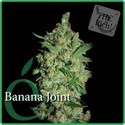 Banana Joint (Elite Seeds) feminizada