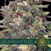 Brainkiller Haze (Vision Seeds) feminizada