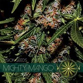 Mighty Mango Bud (Vision Seeds) feminizada