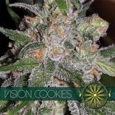 Vision Cookies (Vision Seeds) feminizada