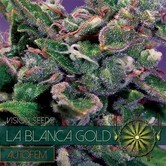 La Blanca Gold Autofloreciente (Vision Seeds) feminizada