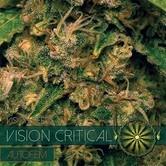 Vision Critical Autofloreciente (Vision Seeds) feminizada