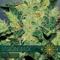 Vision Jack Autofloreciente (Vision Seeds) feminizada