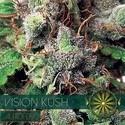 Vision Kush Autofloreciente (Vision Seeds) feminizada