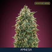 Amnesia (Advanced Seeds) Feminizada