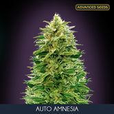 Auto Amnesia (Advanced Seeds) feminizada