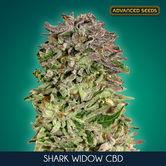 Shark Widow CBD (Advanced Seeds) feminizada