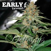 Delicious Candy Fast Version (Delicious Seeds) feminized
