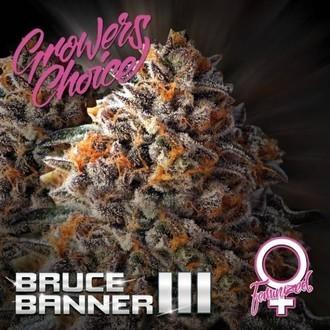 Bruce Banner III (Growers Choice) Feminizada
