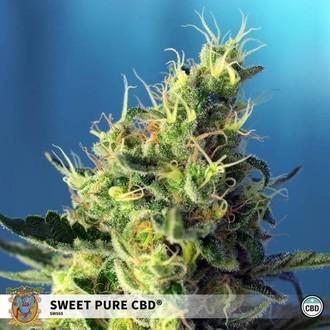 Sweet Pure CBD (Sweet Seeds) feminizada