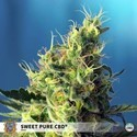 Sweet Pure CBD (Sweet Seeds) feminizada