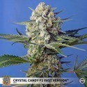 Crystal Candy F1 Fast Version (Sweet Seeds) feminizada