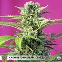 Chem Beyond Diesel CBD (Sweet Seeds) feminizada
