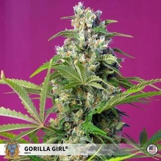 Gorilla Girl (Sweet Seeds) feminizada