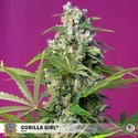 Gorilla Girl (Sweet Seeds) feminizada