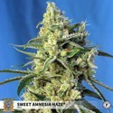 Sweet Amnesia Haze (Sweet Seeds) feminizada
