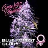 Blue Forest Berry (Grower's Choice) feminized