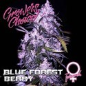 Blue Forest Berry (Growers Choice) feminizada