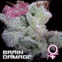 Brain Damage (Growers Choice) feminizada