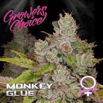 Monkey Glue (Growers Choice) Feminizada